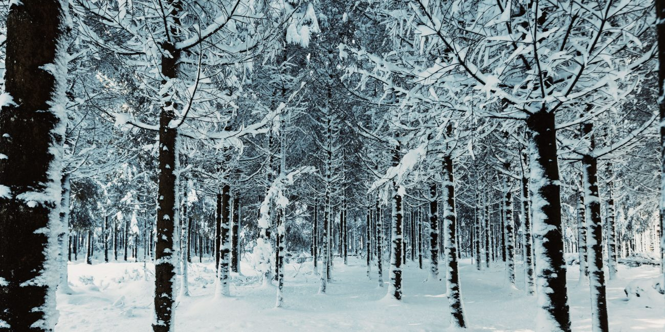 sneeuw landschap fotografie