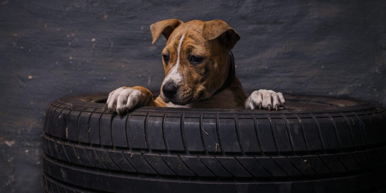 Hond dierenfotografie fotograaf hond